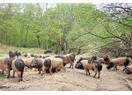 The feedlot of the Basque pork